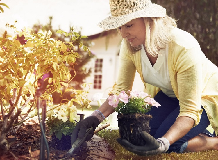 Plant Estrogens and Skin Aging